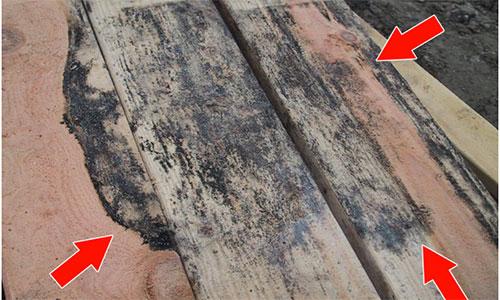 Появление гнилостных скоплений на поверхности натурального дерева